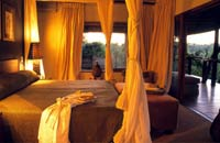 Honeymoon at Londolozi, Africa